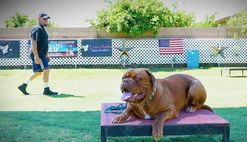Dog Training in Phoenix - Desert Sky K9 - Stay