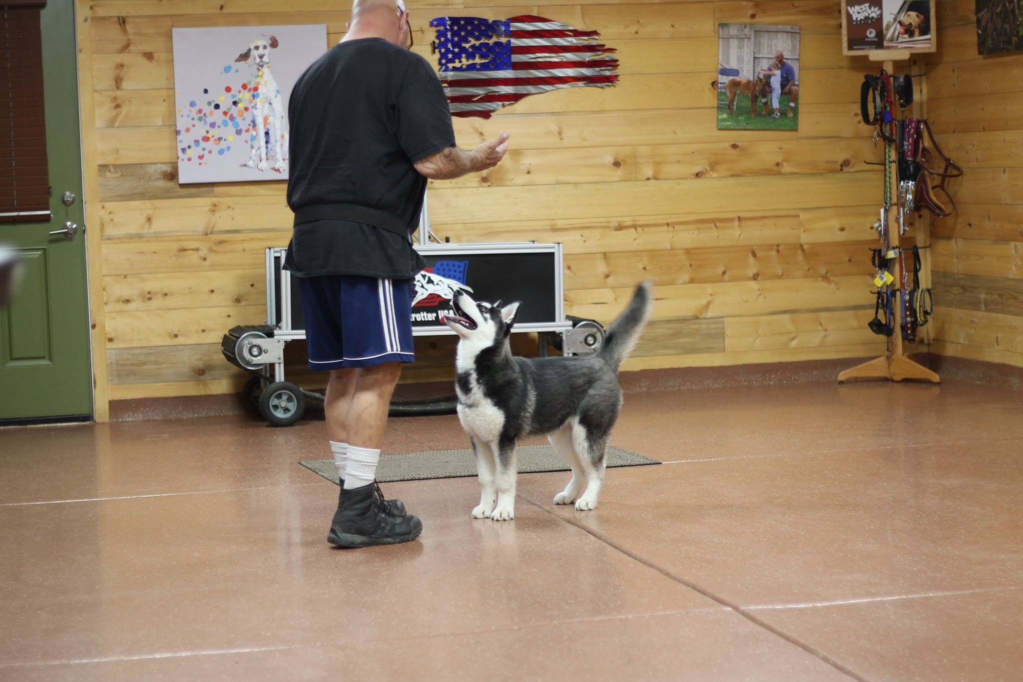 Dog Training in Phoenix - Lucy at Desert Sky K9