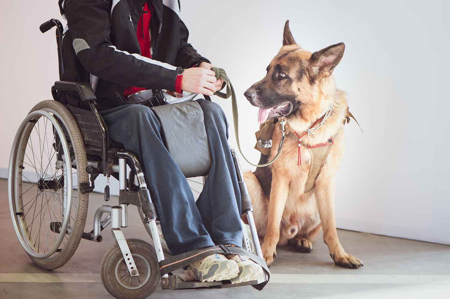 Service Dog Training Phoenix Experts - Desert Sky K9