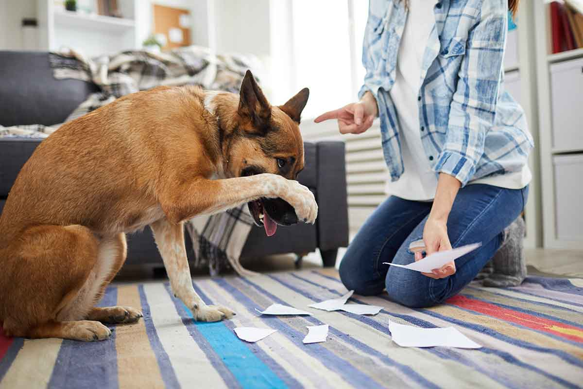 Dog Separation Anxiety - Bad Behavior